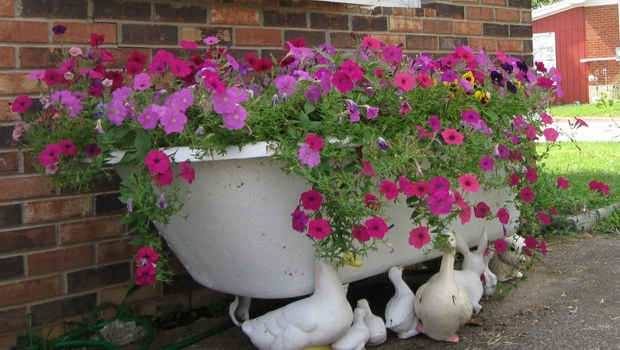 Garden Art Ideas repurpose old oil drums garden umbrella flower planter Upcycled Garden Art Cast Iron Bathtub Pink Purple Petunias