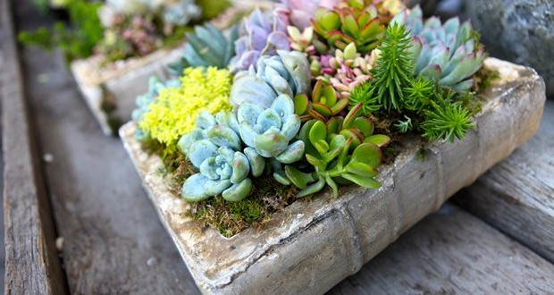 reuse-old-books-repurposed-ceramic-book-succulent-planter-outdoor-patio-decoration-idea