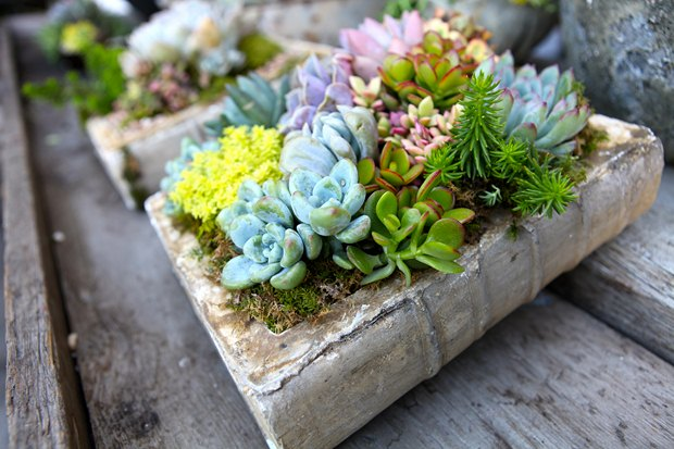 reuse old books repurposed ceramic book succulent planter outdoor patio flower decoration idea