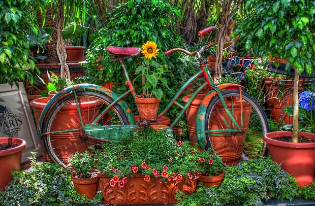 upcycled old garden bike using flowers for decor in the backyard