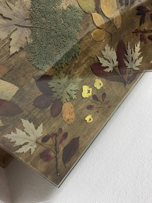 dried autumn flowers and leaves under glass table top