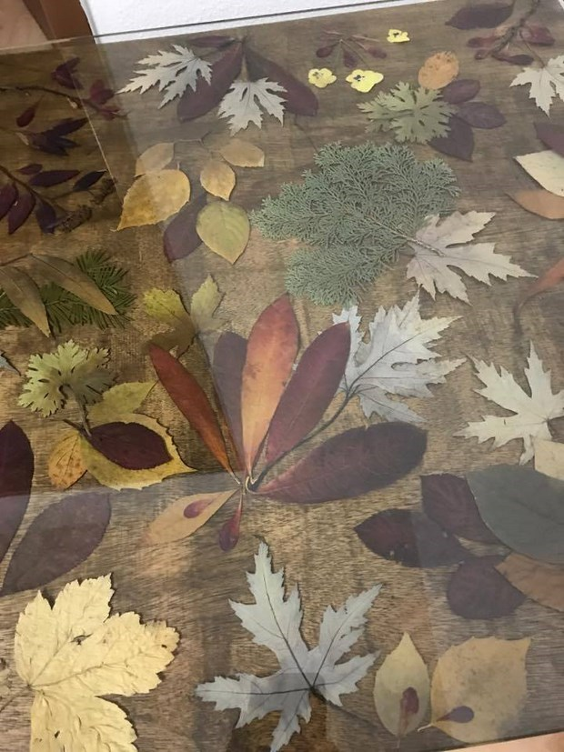 preserving the color of autumn leaves glycerin